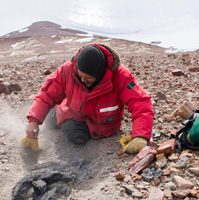 Five New Fossil Forests Found in Antarctica